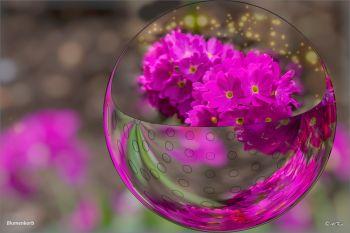 Blumenkorb2