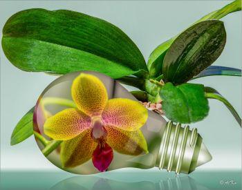 Orchideenlampe
